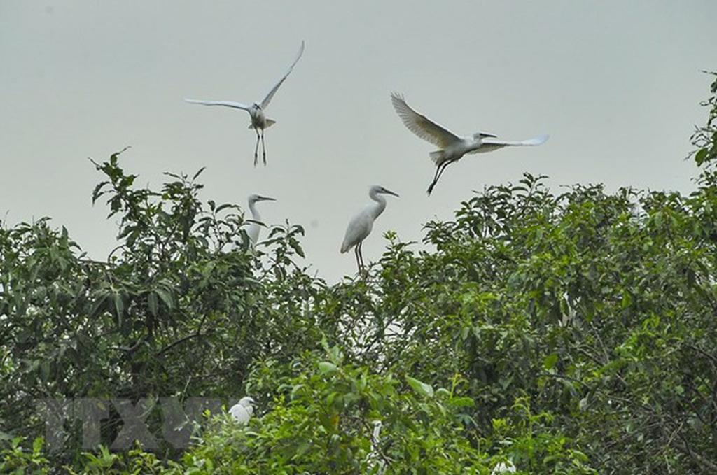 Gia Lac stork sanctuary along Hoang Long river
