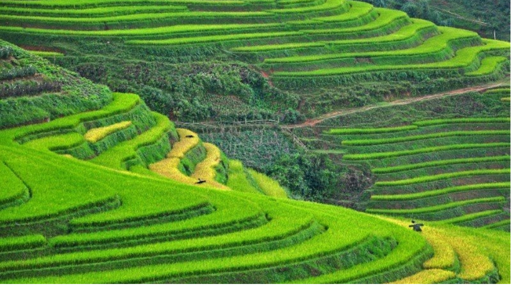 Sapa and Ninh Binh listed among up-and-coming destinations in Asia