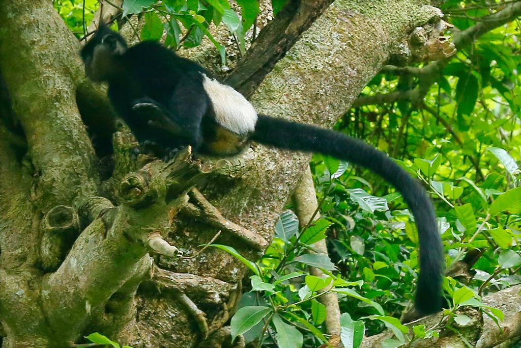 Ninh Binh takes measures to preserve biodiversity