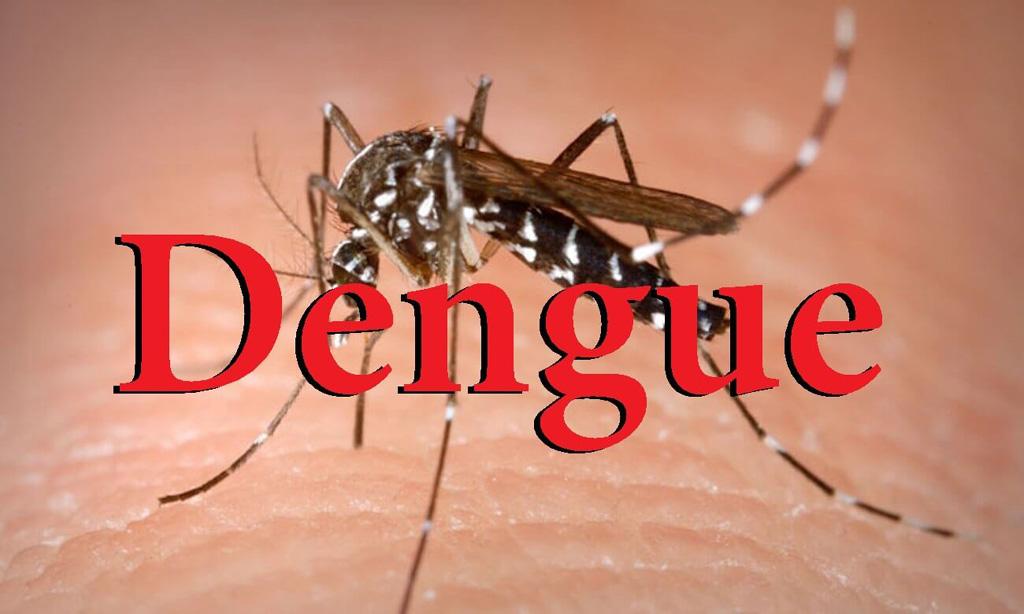 Ninh Binh reports 12 new cases of dengue fever