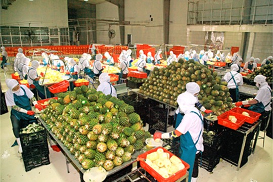 Ninh Binh s export revenue up 23 percent in 2018