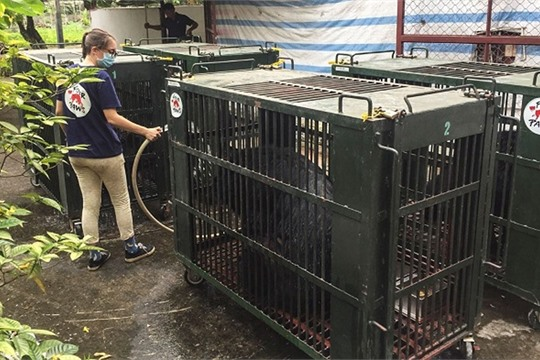 More bears rescued from local bear bile farms