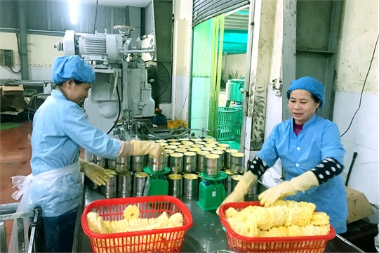 Ninh Binh consistent with export target of 2 2 billion USD in 2020