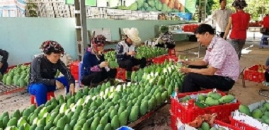 Exports of vegetables, fruits up 10%