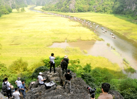 Introducing the beauty of Tam Coc in ripe rice season
